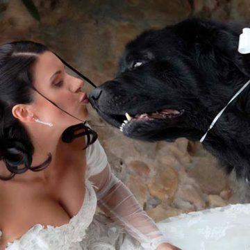 Foto spontanee di matrimonio foto con cane - FotoArt Lucca